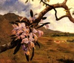 Flores de mayo, 1896.