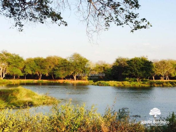 Laguna del bosque húmedo tropical. Foto oficial de la Fundación Jardín Botánico de Maracaibo.
