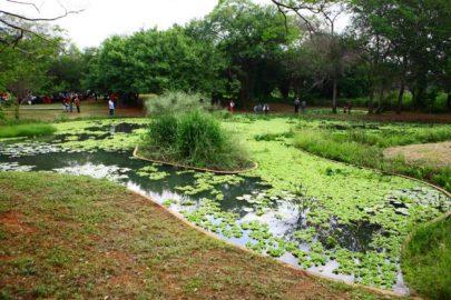 El JBM sirve a los estudiosos de la botánica para responder a desafíos ambientales. Foto Diariorepublica.com