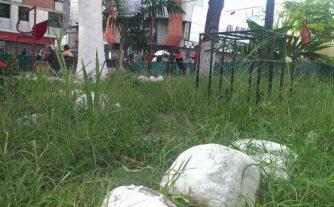Maleza por entre las piedras que le colocaron a la plaza Bolívar de Valera. Activo patrimonial en riesgo. Venezuela.